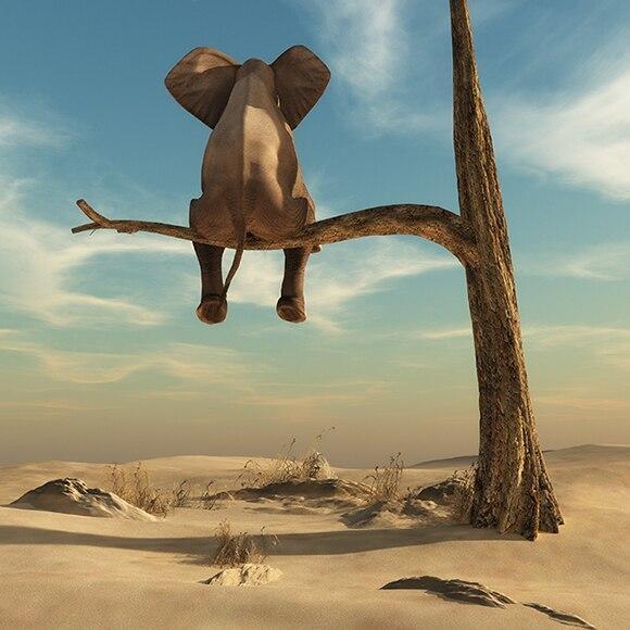 Toile Éléphant Assis