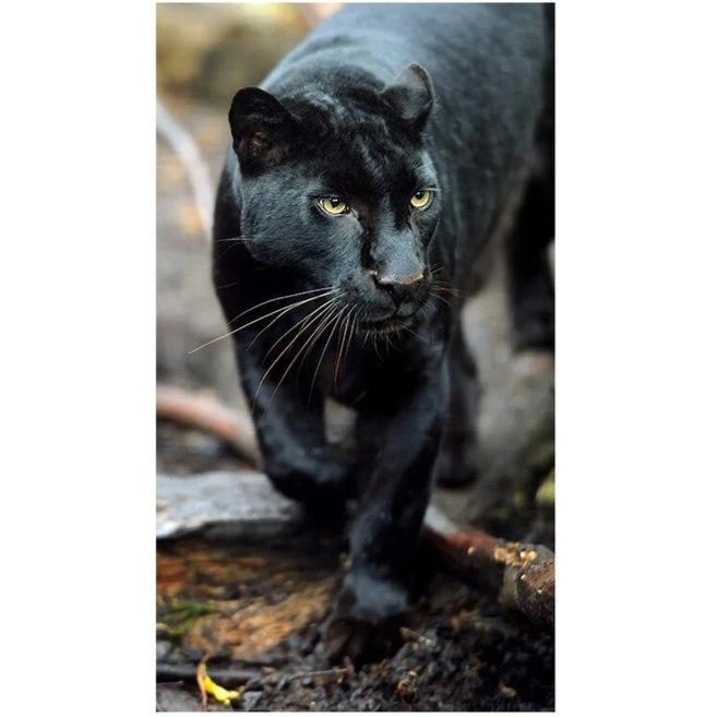 Toile Panthère Noire