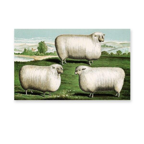 Tableau Mouton Peinture