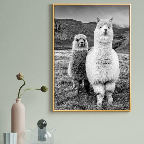 Poster Alpaga Noir Et Blanc