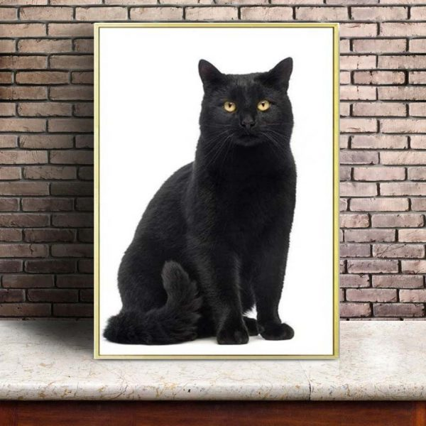 Poster Chat Animal