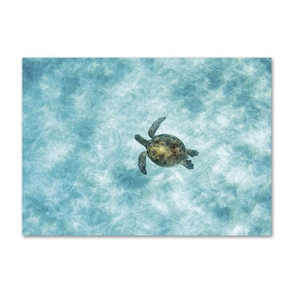 Toile Tortue Paisible